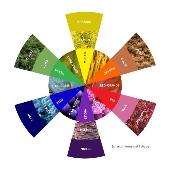 color wheel plants, color wheel flowers, color wheel gardens, color wheel leaves
