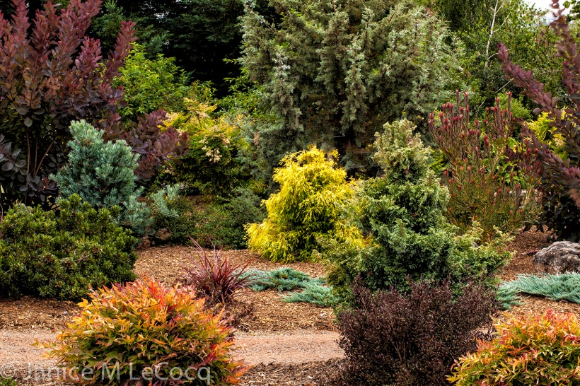 color wheel combinations, foliage plants, colorful foliage