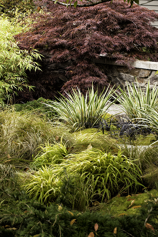Private spaces the lecocq garden form and foliage for Ornamental japanese grass