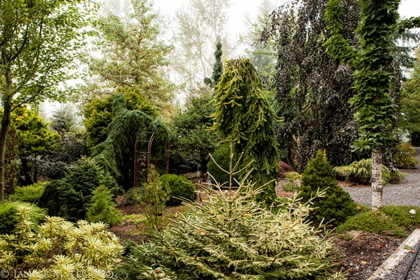 Bob Fincham, evergreen foliage, designing with evergreens, conifers