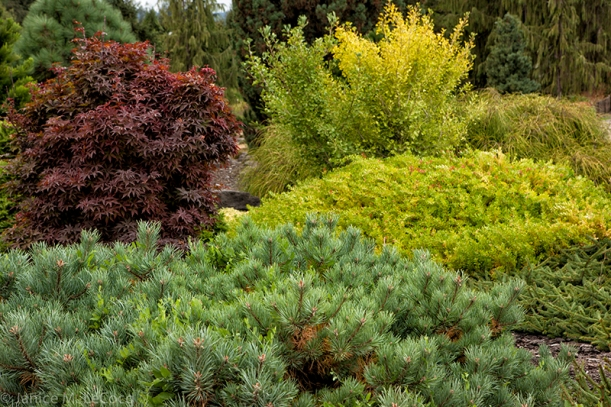 mixed foliage, evergreen shrubs, conifers