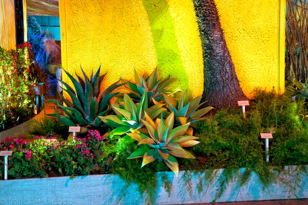 Mexico display garden at 2013 SF Flower & Garden Show