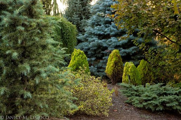evergreen foliage, mixed evergreen foliage border