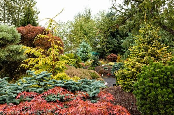 conifers, evergreen plants, foliage border