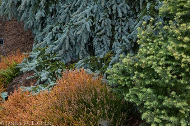 Weeping blue and upright orange combine with starry mint green for a rich combination of colors and shapes