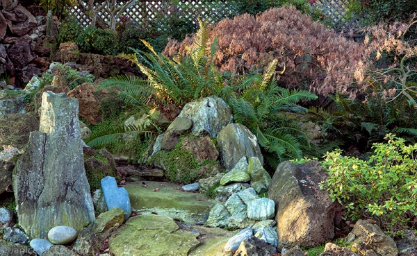 Japanese maples, gardening with rocks