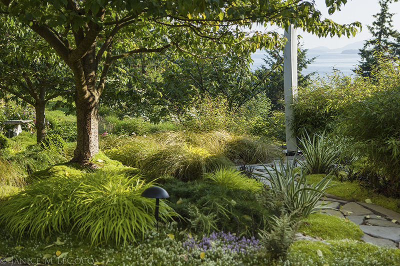 Decorative ornamental grasses in different shades of green turn down the heat