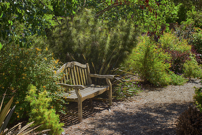 cape rush, landscaping with evergreen plants, conifers, shrubs