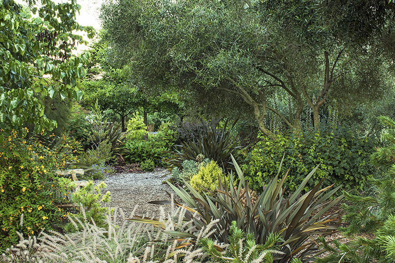 designing with foliage plants, evergreen plants, shrubs, olive trees