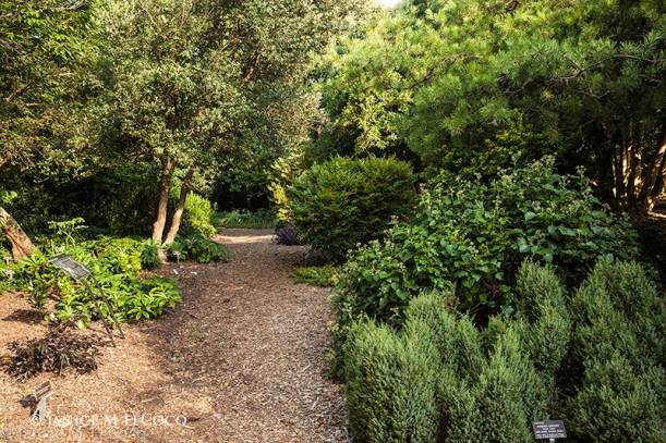 green shrubs, evergreen plants, designing with shrubs