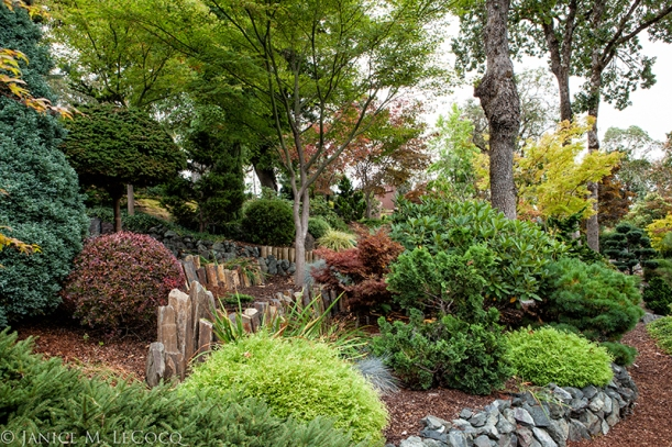 conifers, foliage plants, evergreen shrubs