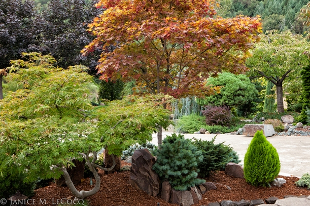 conifers, foliage garden, evergreen border