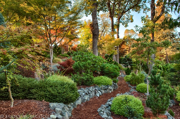 conifer garden, foliage garden, pine trees