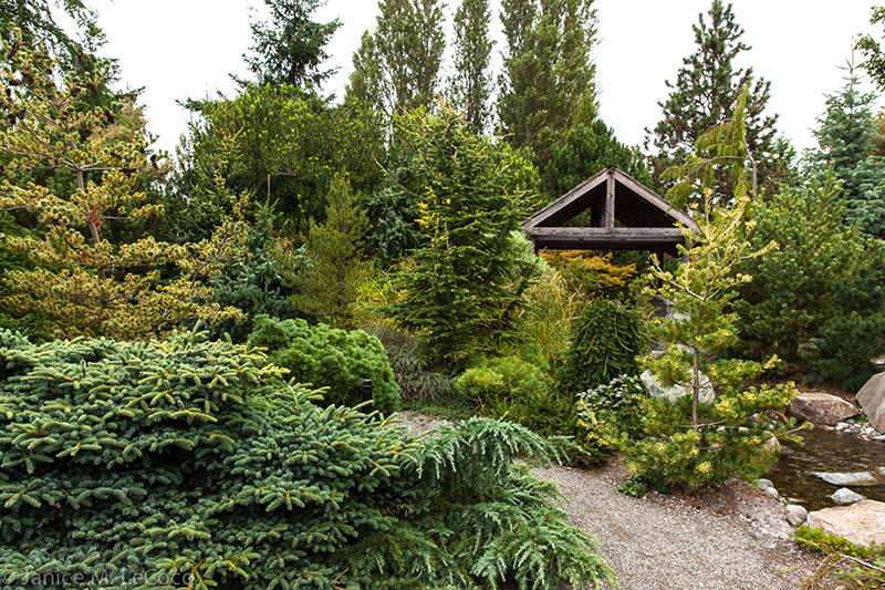 American Conifer Society, foliage gardening
