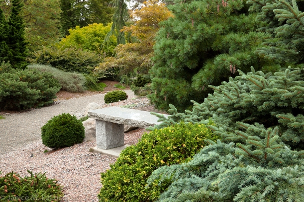 conifer garden, South Seattle Community College Arboretum