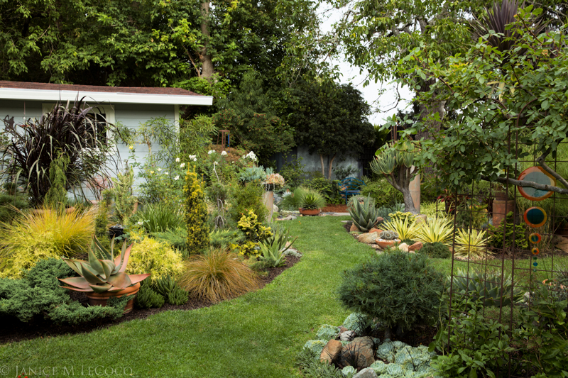 Succulents, conifers, woody foliage plants and grasses make a rich and varied foliage garden.